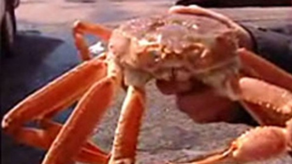 pe-hi-snow-crab-852